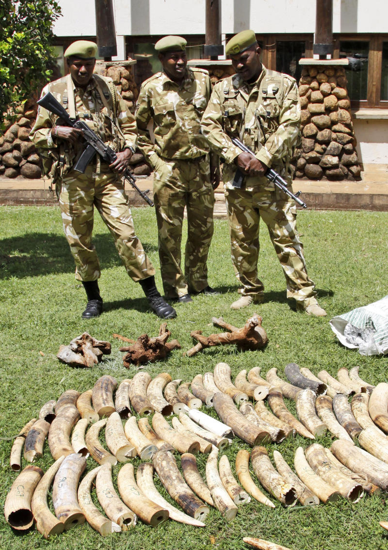 Kenyan Wildlife wardens keep a watch on confiscated elephant tusks at the Kenyan wildlife offices in Nairobi, Kenya, Wednesday, Jan. 16, 2013. Kenyan authorities  seized at least two tons of illegal Elephant ivory at the Kenyan port of Mombasa destined for Indonesia. Elephant poaching deaths are on the rise across Africa because of increased demand from Asia — and particularly from China.  (AP Photo/Khalil Senosi)