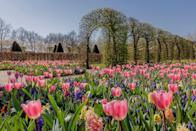 """<p>When it comes to floral wonderlands, you won't find a better place for a spring escape than the Netherlands when its famous <a href=""""https://www.countryliving.com/uk/travel-ideas/abroad/a27340790/visit-keukenhof-gardens-holland-full-bloom/"""" rel=""""nofollow noopener"""" target=""""_blank"""" data-ylk=""""slk:Keukenhof Gardens"""" class=""""link rapid-noclick-resp"""">Keukenhof Gardens</a> open for just a few weeks of the year. Known as the Garden of Europe, Keukenhof sees around seven million bulbs planted each year, with over 800 varieties of tulips from the best Dutch producers, along with hyacinths, daffodils, roses and more. </p><p>You can explore Keukenhof on an exclusive mini-cruise to Amsterdam in April 2021, where you'll be joined by Gardeners' World presenter Adam Frost, who will pass on his gardening tips and answer your questions. </p><p><a class=""""link rapid-noclick-resp"""" href=""""https://www.countrylivingholidays.com/tours/netherlands-holland-tulips-cruise-adam-frost"""" rel=""""nofollow noopener"""" target=""""_blank"""" data-ylk=""""slk:FIND OUT MORE"""">FIND OUT MORE</a></p>"""