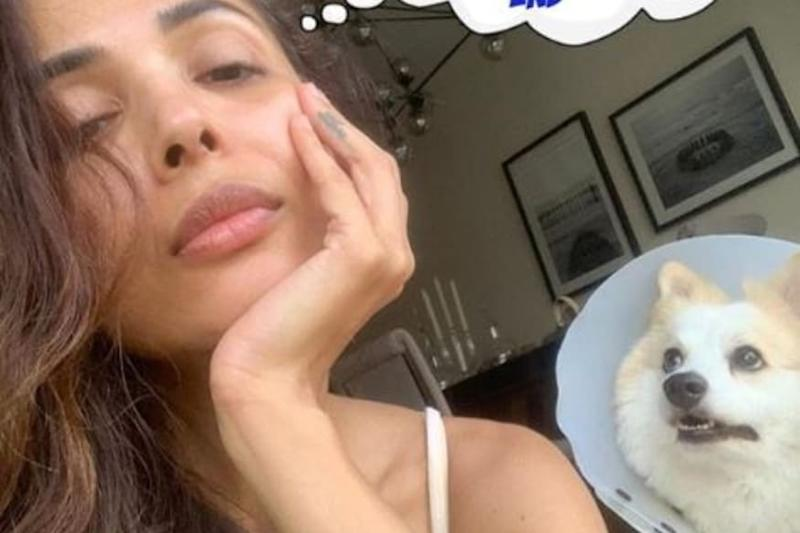 Malaika Arora and Her Dog are Looking for an Answer Every Indian in Lockdown is Searching for