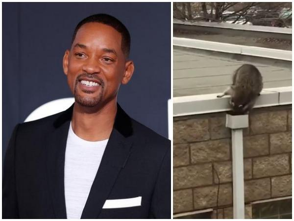Will Smith and the raccoon sneaking at his home (Image courtesy: Instagram)