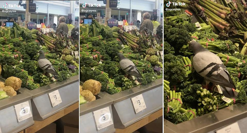 A bird seen in a TikTok video, pecking at broccolini at Northcote Plaza Coles in Melbourne.