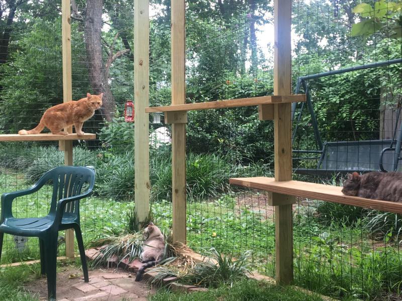 """This June 2017 photo provided by Danielle Bays shows her cats playing in a """"catio"""" in Washington, D.C. To protect bird populations, as well as the cats that prey on them, both bird and cat experts urge cat owners to keep their felines indoors, on leashes or in """"catios."""" (Danielle Bays via AP)"""