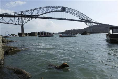 A dog swims as the Bridge of the Americas is seen in the background on the Pacific side of the Panama Canal in Panama City January 14, 2014. REUTERS/Carlos Jasso
