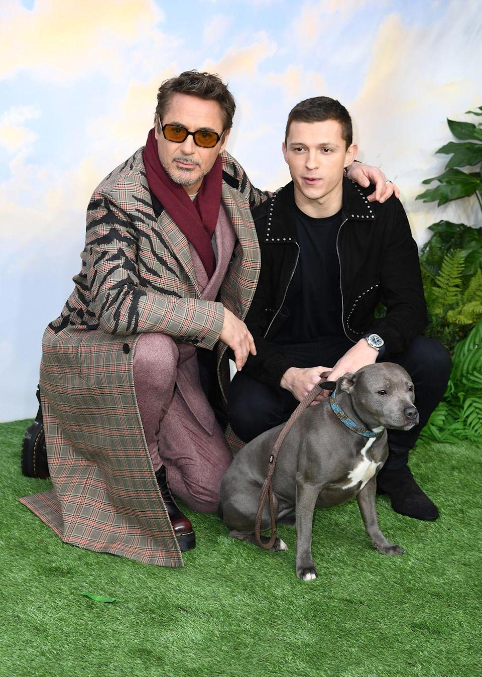 <p>Robert Downey Jr and Tom Holland attend the <em>Dolittle</em> special screening at Cineworld Leicester Square on January 25, 2020 in London, England.</p>