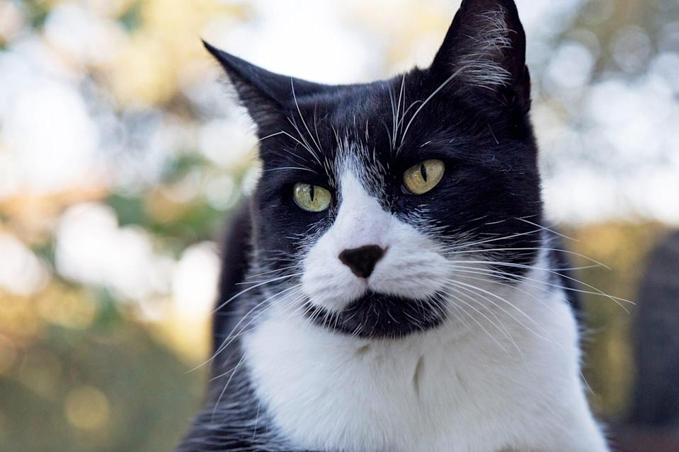 Cat Detects Woman's Breast Cancer