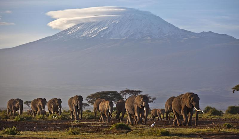 FILE - In this Monday, Dec. 17, 2012 file photo, a herd of adult and baby elephants walks in the dawn light as the highest mountain in Africa Mount Kilimanjaro in Tanzania is seen in the background, in Amboseli National Park, southern Kenya. Famed scientist and founding former chairman of the Kenya Wildlife Service (KWS) Richard Leakey is urging Kenya's president to invoke emergency measures to protect the country's elephants and rhinos and said Wednesday, March 19, 2014 that the KWS had been infiltrated by people enriching themselves off poaching, that poaching ring leaders were known, but that the government has taken no action. (AP Photo/Ben Curtis, File)