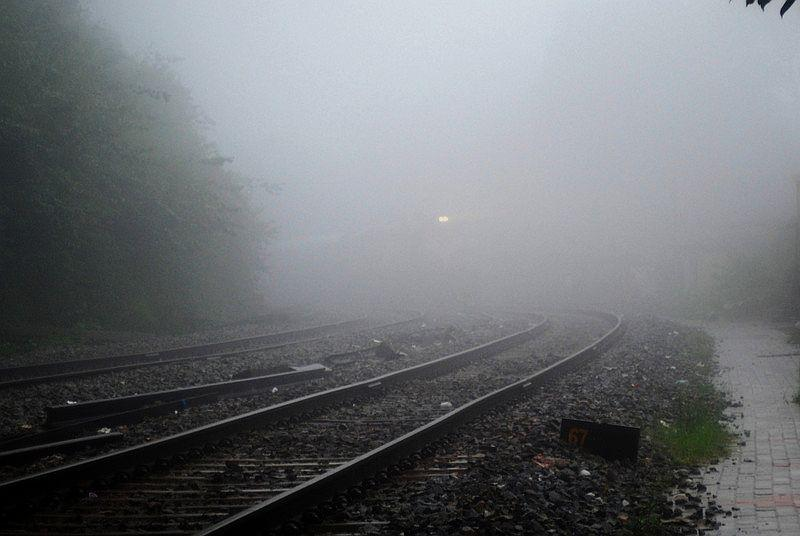 Like glowing eyes, a pair of headlights appears around the corner from the misty jungle.