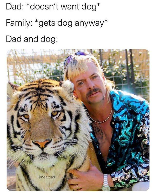 """<p>This meme combines two of the internet's favorite things: dads and the dogs they love but swear they don't want, and Joe Exotic. With so many costume ideas to choose from here, you'll have to dress up more than once.</p><p><a href=""""https://www.instagram.com/p/B-KGEcHAeF_/?utm_source=ig_embed&utm_campaign=loading"""" rel=""""nofollow noopener"""" target=""""_blank"""" data-ylk=""""slk:See the original post on Instagram"""" class=""""link rapid-noclick-resp"""">See the original post on Instagram</a></p>"""