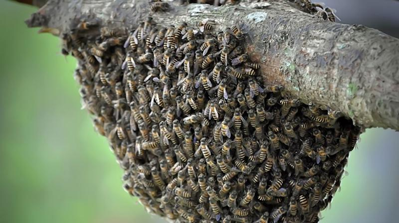 Woollahra Council have been slammed by Paddington residents after 50,000 bees were poisoned. Source: Getty (file image)