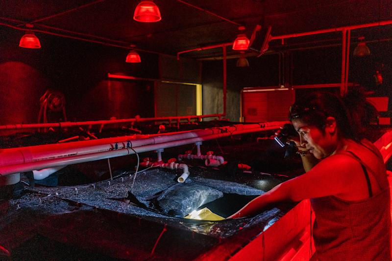 Claudia Patricia Caamal Monreal, 36, who helps in Dr. Rosas' lab, shows off an octopus in one of the lab's rooms where they lay eggs. | Jake Naughton for TIME