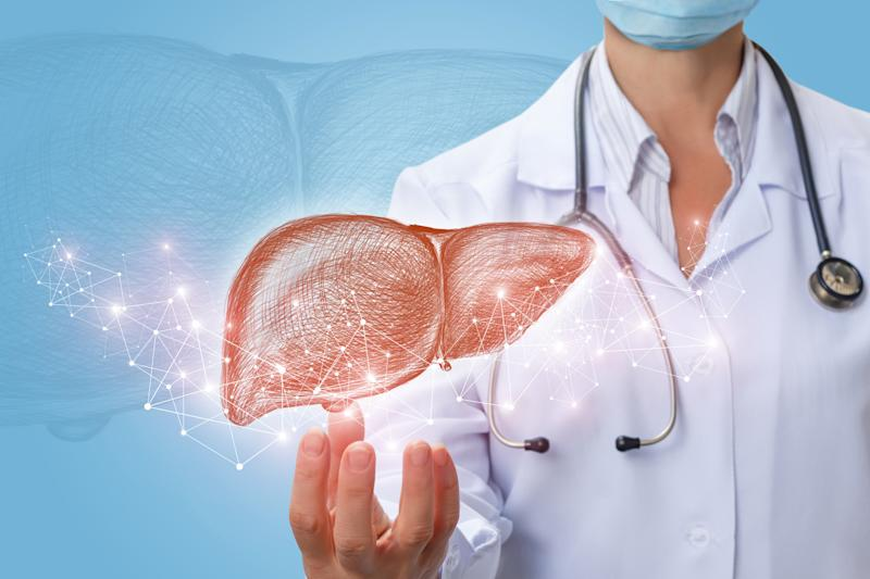 Image of a liver suspended over a doctor's hand.