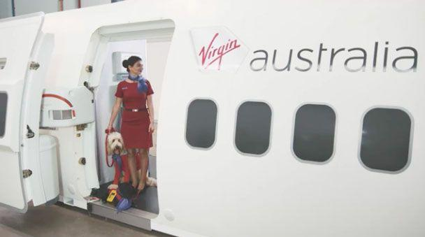 Devastated: There will be no canine crew on your next Virgin flight.