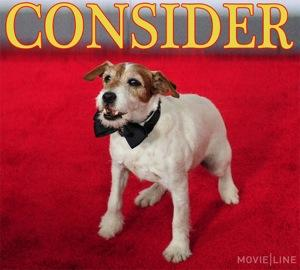 Awards Season Is Going to the Dogs, Thanks to Uggie from 'The Artist'