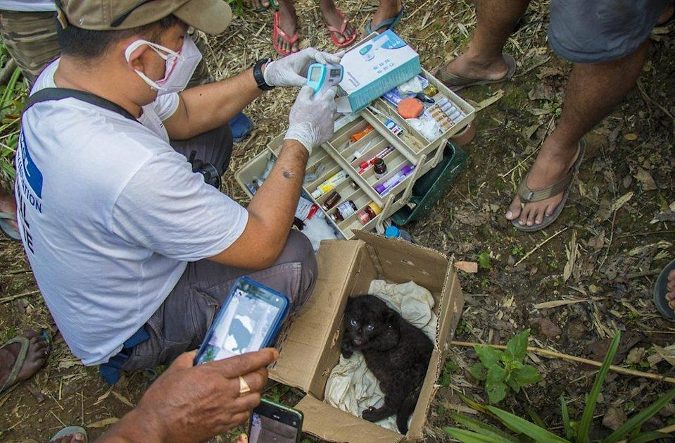 A Vet from Wildlife Trust of India treats the leopard cub