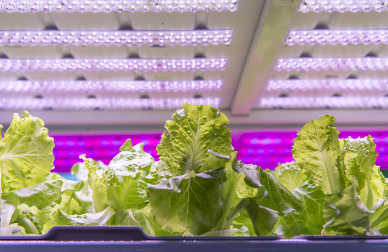 Grow your veggies indoors using an LED light and other hydroponic gardening tools. (Photo: Getty)