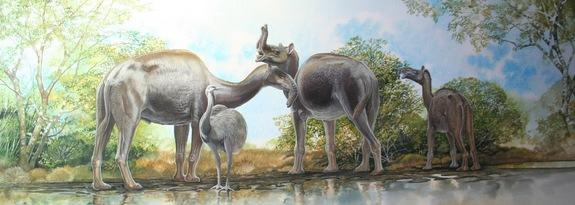 Macrauchenia was once thought to be related to a camel