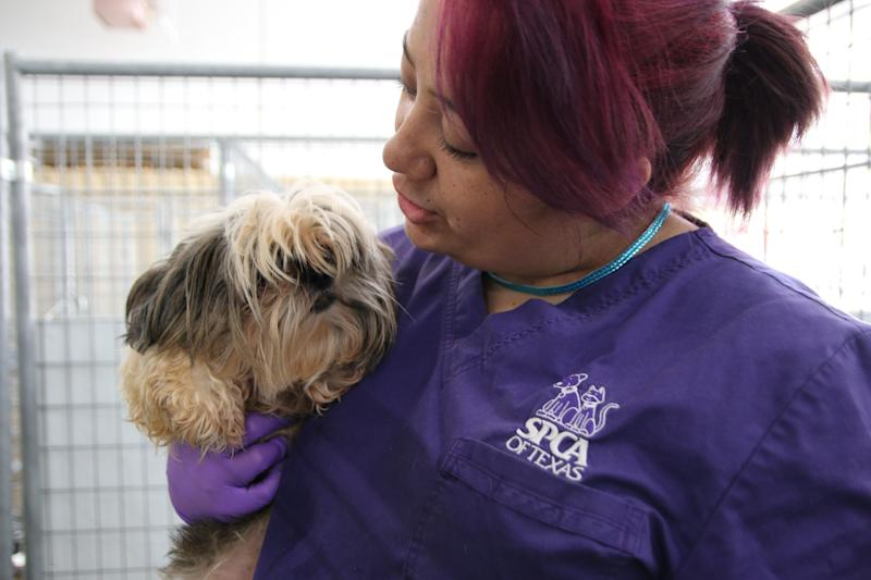 An SPCA of Texas worker holds a recently rescued dog.