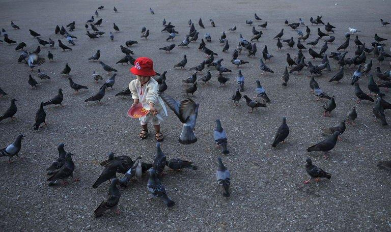 A child feeds pigeons at dawn on New Year's Day at Yangon jetty on January 1, 2013