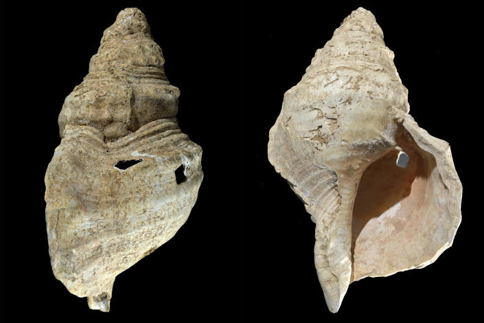 This combination of photos provided by researcher Carole Fritz in February 2021 shows two sides of a 12-inch (31 cm) conch shell discovered in a French cave with prehistoric wall paintings in 1931. Using modern microscopy techniques to examine how the shell was modified and hiring a French horn player to test it out, they found the shell could produce C, C sharp and D notes. By carbon dating other related artifacts in the cave, researchers estimate the age to be around 18,000 years, making it the world's oldest seashell instrument known. (Carole Fritz via AP)