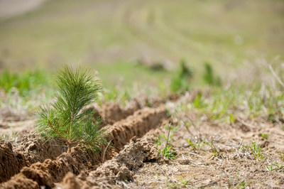 Forests Ontario has facilitated the planting of more than 34 million trees coast-to-coast. (CNW Group/Forests Ontario)