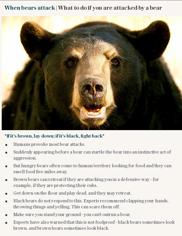 When bears attack   What to do if you are attacked by a bear