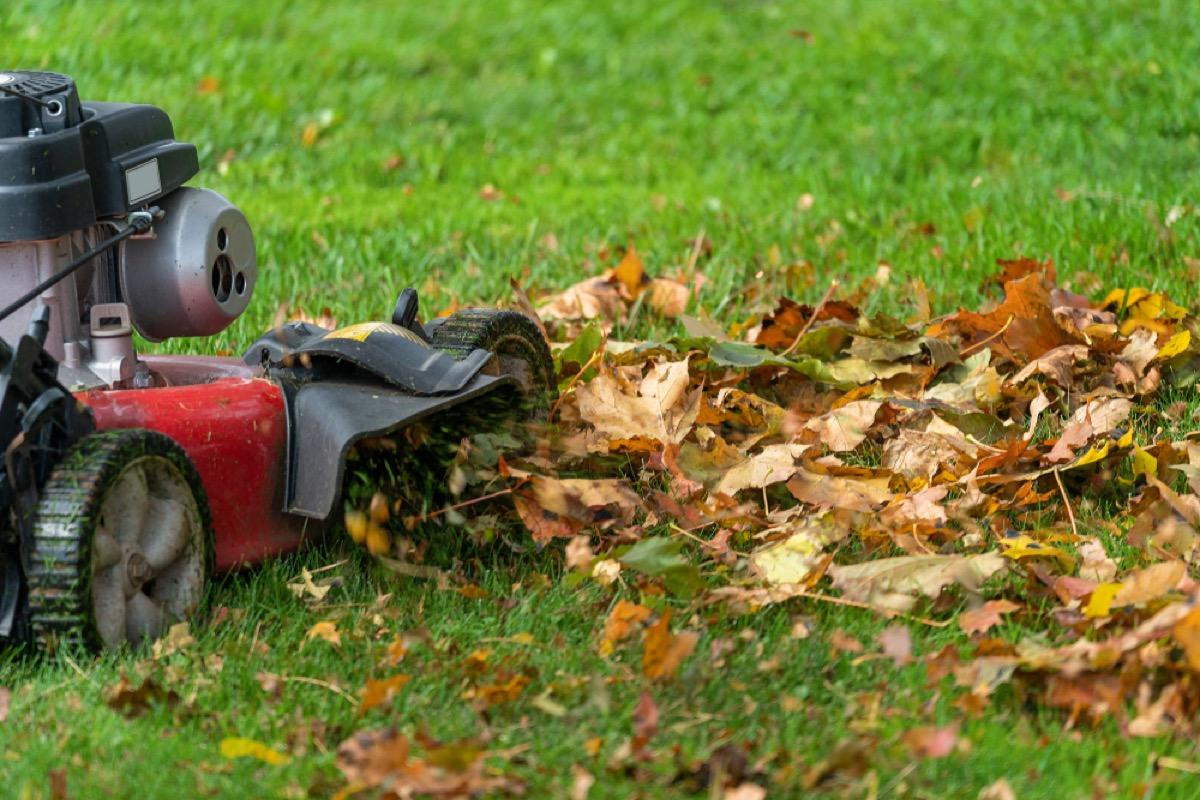 """While you may have skipped your raking duties, there's one essential task that can put some of those leaves to good use: running your lawnmower over your lawn before the first snowfall. When they're chopped into smaller pieces with a lawnmower, leaves """"protect the soil with a natural mulch,"""" says Rose. This will help the leaves decompose more quickly, becoming more efficient food for your plants.  And if you have an excess of leaf mulch on your lawn, make sure to sprinkle some throughout your garden and around the base of your trees where your lawnmower can't reach, too."""