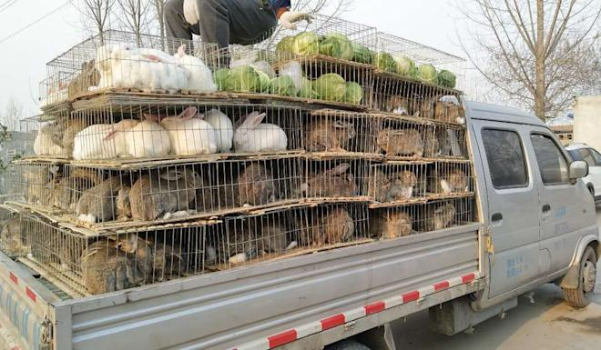 Eating rabbits will still be allowed in Shenzhen. Photo: Handout
