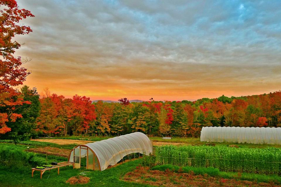 Soul Fire Farm in Albany, N.Y., is 80 acres of land owned and operated by farmer and author Leah Penniman.