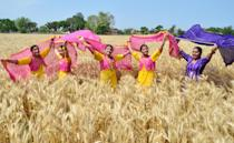 <p>Students of Sri Guru Harkrishan Senior Secondary Public School, Sultanwind Link Road in a traditional dress pose at wheat field during Baisakhi celebrations on April 11, 2018 in Amritsar, India. Vaisakhi is an ancient festival of Punjabis, marking the Solar New Year and also celebrating the spring harvest. (Photo by Sameer Sehgal/Hindustan Times via Getty Images) </p>