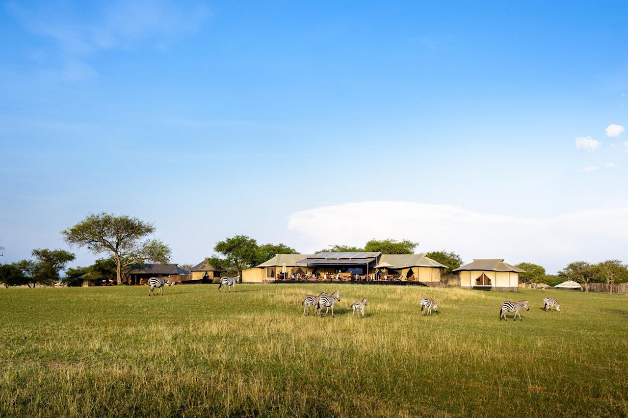 <p><strong>Set the scene for us.</strong><br> The vast golden savannah of the Serengeti Plains unfurls all about. There's a string of cream canvas tents set between occasional acacia trees, staffed by a cast of slick, enthusiastic young Tanzanians passionate about conservation.</p> <p><strong>What's the story?</strong><br> Sabora sits within a 350,000-acre private game reserve run by the American philanthropist Paul Tudor Jones, with the Serengeti National Park on one side, and community land on the other. The camp is one of five on Grumeti: a project created to protect wildlife, provide a buffer zone between national park and people, and to create jobs for rural communities. Because the reserve is so private and remote, it's a favored place for A-listers to jet in on safari, whether that's Oprah, Jessica Biel, Ellen DeGeneres, and Charlize Theron, or billionaires from the Buffets to Saudi royalty.</p> <p><strong>What can we expect from our room?</strong><br> Within the retro styling—soon to be completely transformed by a 2020 refit—is 21st-century technology and solar-powered electricity that drives the (slow) Wi-Fi, reading lights, well-stocked minibar, and hairdryer, as well as an old-fashioned fan to keep air circulating in summer.</p> <p><strong>How about the food and drink?</strong><br> No one ever goes hungry on safari—although Singita has made more effort than most to ensure there are healthy options available too. So, egg-white-and-herb omelettes as well as full-fat French toast for breakfast; nutty flapjacks for tea, alongside a silver cake stand of French pastries, salmon sandwiches, and colorful macaroons; grilled Tanzanian prawns for dinner, as well as rich chicken curry and home-made Indian sambal. The barman is adept at creating inventive cocktails (coconut mojito anyone?), and Singita prides itself on having the finest cellar of South African wines in the bush—as well as surprisingly good espresso.</p> <p><strong>Anything to say about the service?</s
