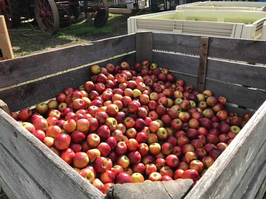"""<p><strong>When: </strong>October 5-6 and October 12-13</p><p><strong>Where:</strong> Biglerville, Pennsylvania </p><p><strong>What to expect:</strong> As you may have guessed from the title, this event is all about apples! The festival is huge and there's no on-site parking (you have to take a shuttle from a specified point), so we recommend spending the weekend in the area to really make the most of it. </p><p><em>For more information, visit <a href=""""http://www.appleharvest.com"""">appleharvest.com</a> </em></p>"""
