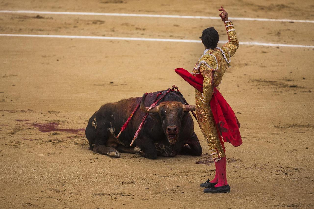 Spanish bullfighter Jimenez Fortes salutes the spectators as a Los Chospes ranch fighting bull dies on the floor during a bullfight at Las Ventas bullring in Madrid, Spain, Tuesday, May 20, 2014. Bullfighting is a traditional spectacle in Spain and the season runs from March to October. (AP Photo/Andres Kudacki)