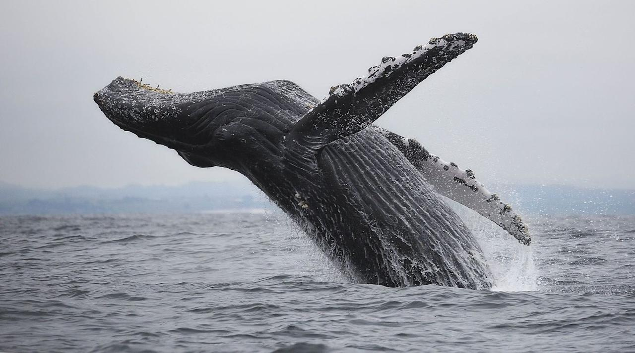 Best places in the u s to go whale watching for Best places to travel in october in the us
