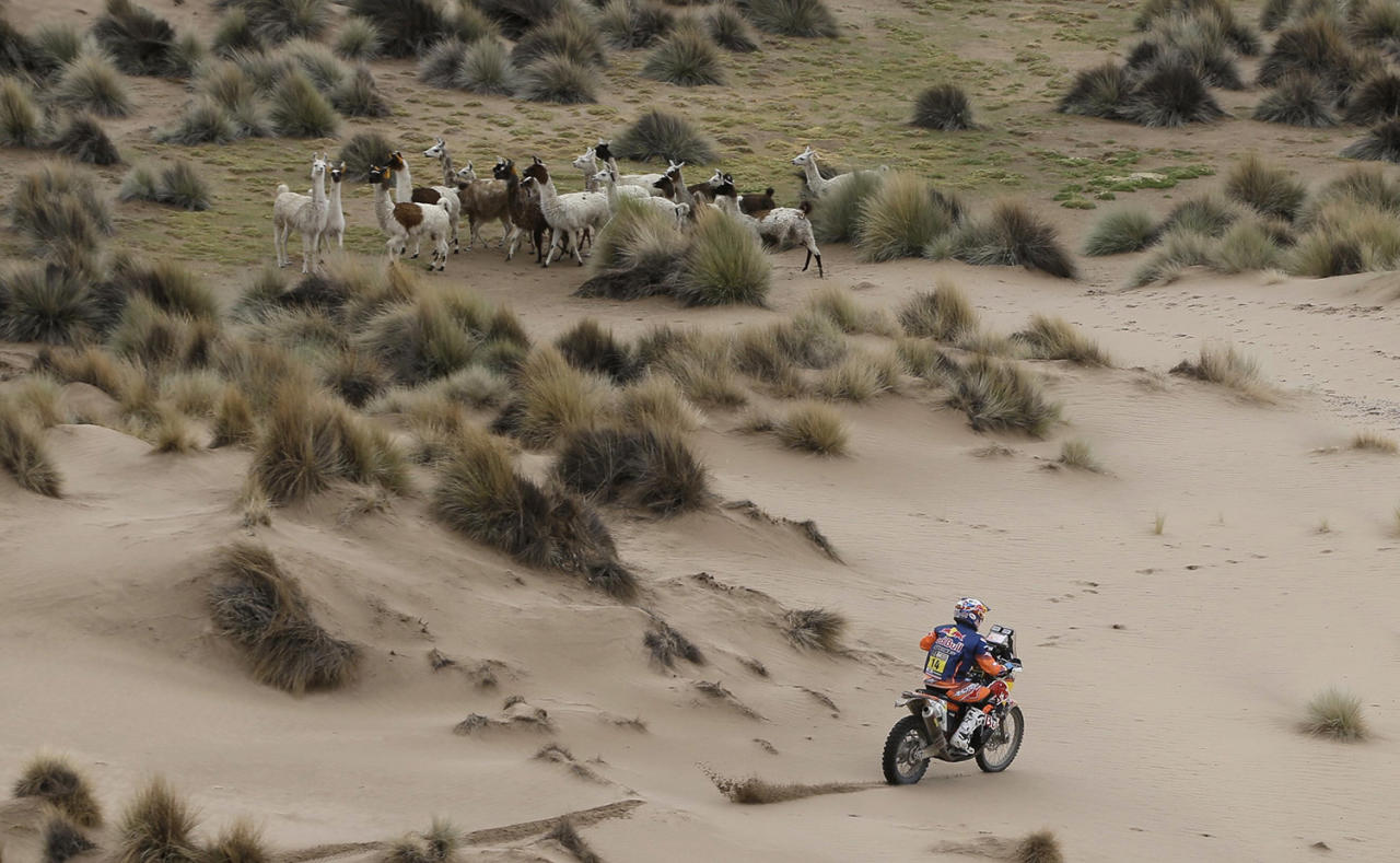 <p>Britain's Sam Sunderland rides his KTM motorbike past a herd of llamas during the 7th stage of the Dakar Rally between Oruro and Uyuni, Bolivia, Monday, Jan. 9, 2017. The race started in Paraguay and passes through Argentina as well. (AP Photo/Martin Mejia) </p>