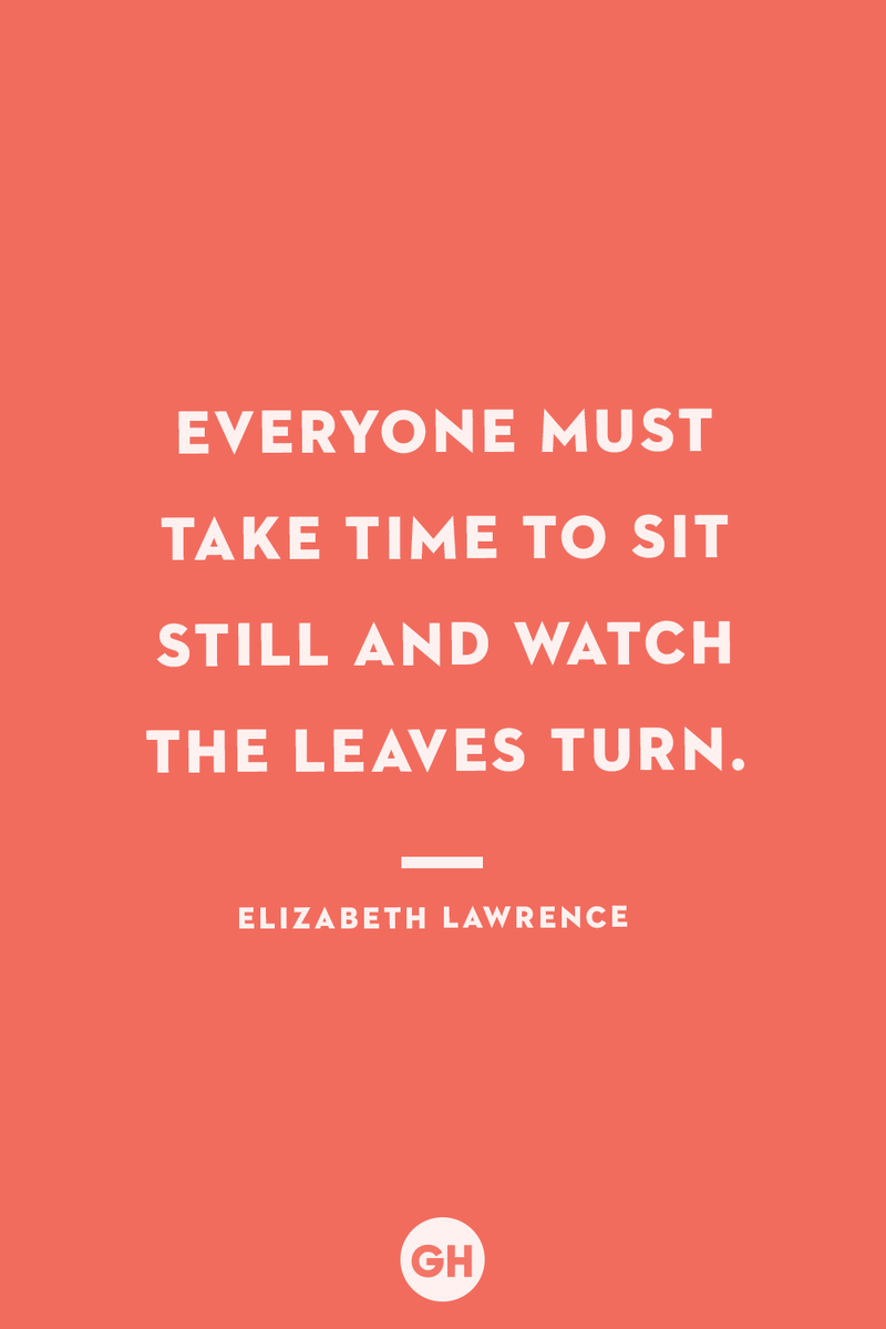<p>Everyone must take time to sit still and watch the leaves turn.</p>