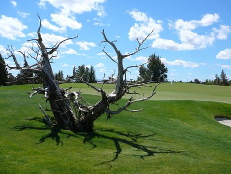 High desert meets perfectly groomed golf fairways at Pronghorn Golf Resort in Bend, Oregon.