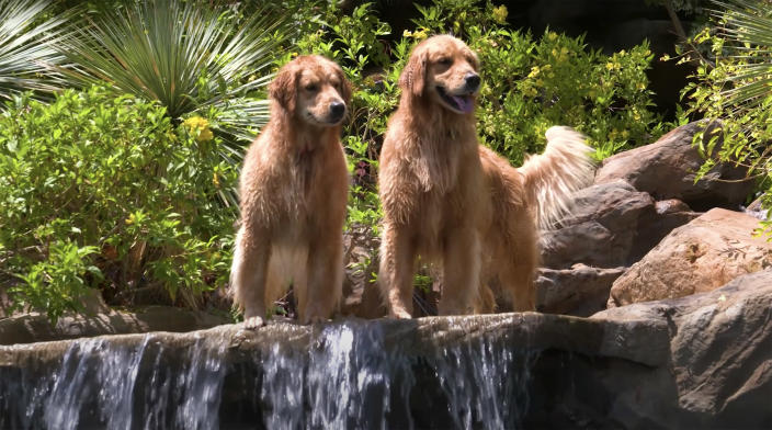 Woody and Lola, Jeff Franklin's dogs, are in the spotlight! (Jeff Franklin / YouTube)