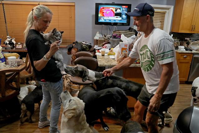 <p>Gretchen and Ron Levine of A Paw Above in Hollywood, Fla., are taking care of 20 dogs and 21 cats as they've been inundated with pet care requests by people fleeing Hurricane Irma. (Photo: Susan Stocker/Sun Sentinel/TNS via Getty Images) </p>