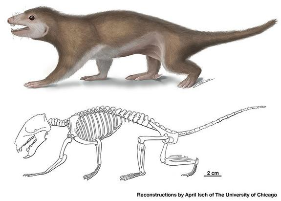 Fossil of Ancient Hairy Creature Reveals Clues About Mammal Ancestors
