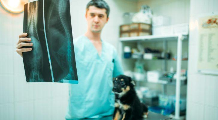 vet looking at a dog's xray to represent pet stocks like IDXX