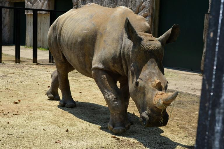 Emma the white rhino has finally arrived in Japan after her travel was delayed by the pandemic