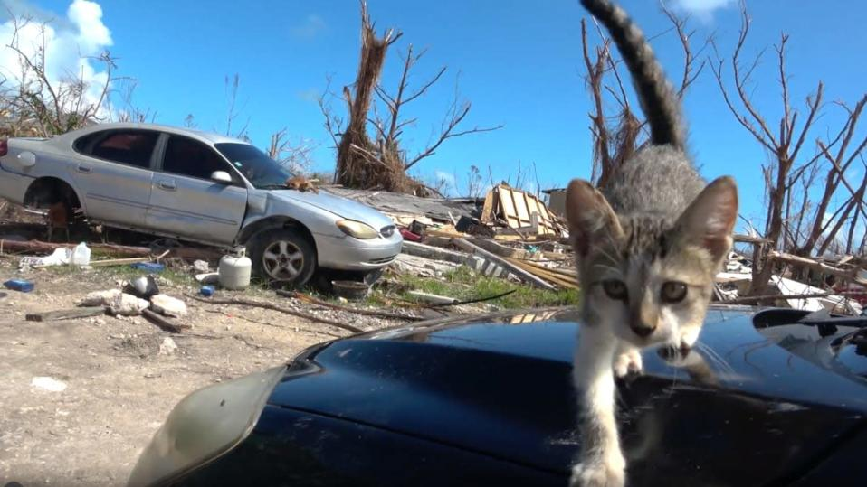 Man Rescues Cats With a Drone