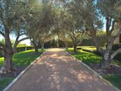 Quality olive trees that only the Godfather — Willie Mays — truly would appreciate.