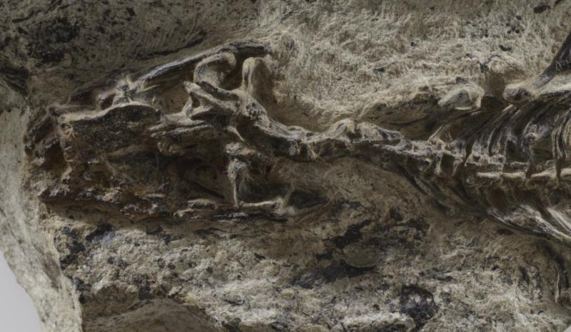 240 million year-old 'mother of all lizards' found