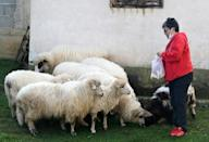 Sonja Leka feeds sheep that provide the wool for the traditional handicrafts