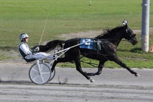 Untouchable One won the Atlantic Breeders Crown at just two years old.  (Submitted by Cheryl Geldart - image credit)