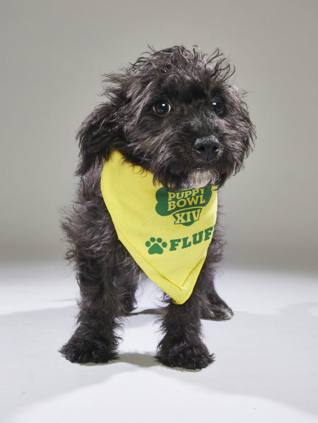 <p>Team: Fluff<br> From: Badass Brooklyn Animal Rescue<br> (Photo: Animal Planet) </p>