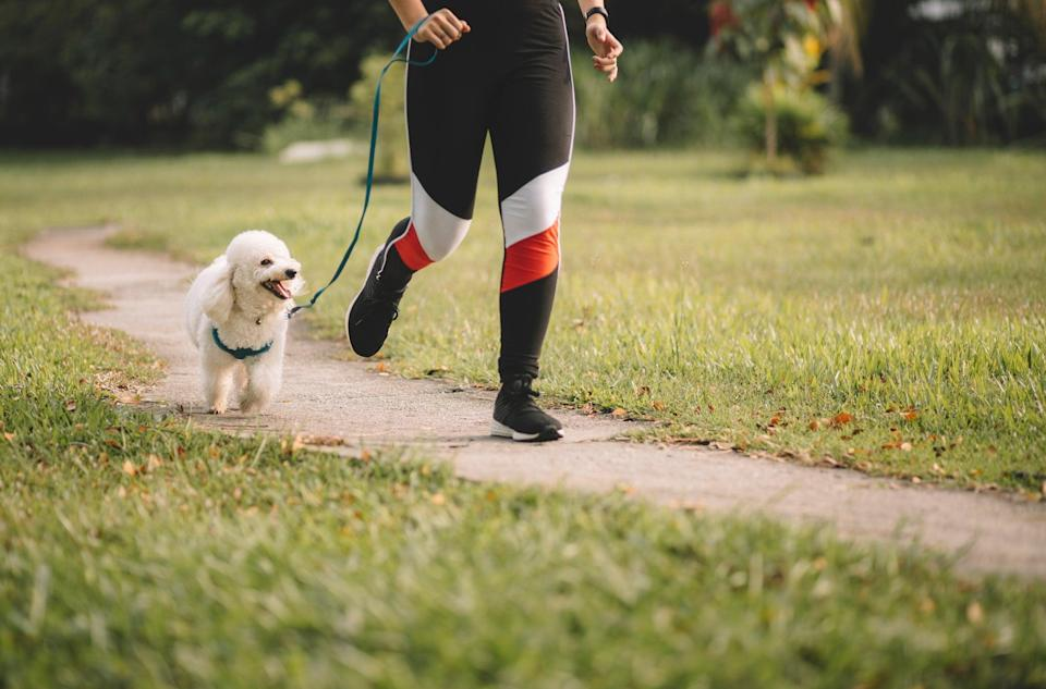 <p>Dog theft has risen 170% since 2019, according to DogLost</p> (Getty/iStock)