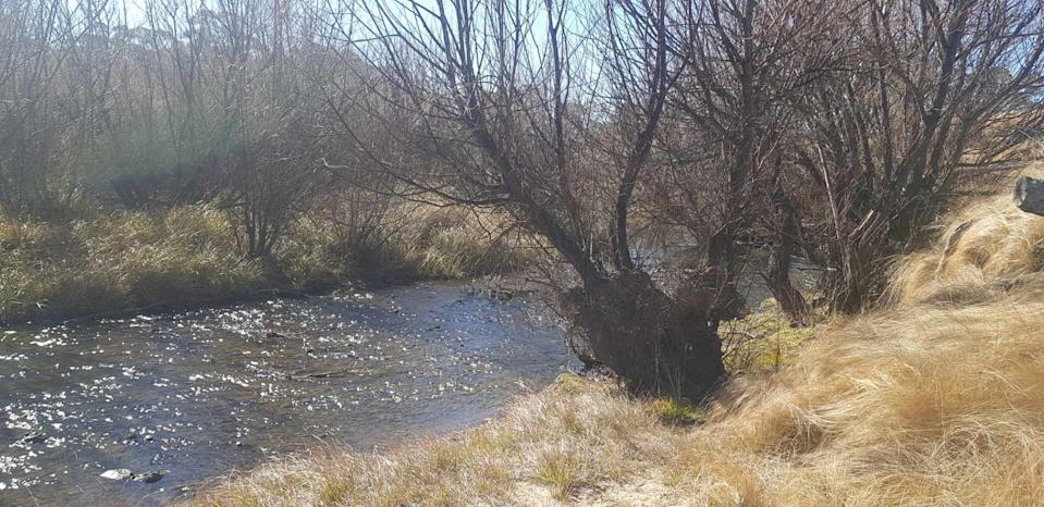 A river runs trough a field of long grass and trees without leaves.