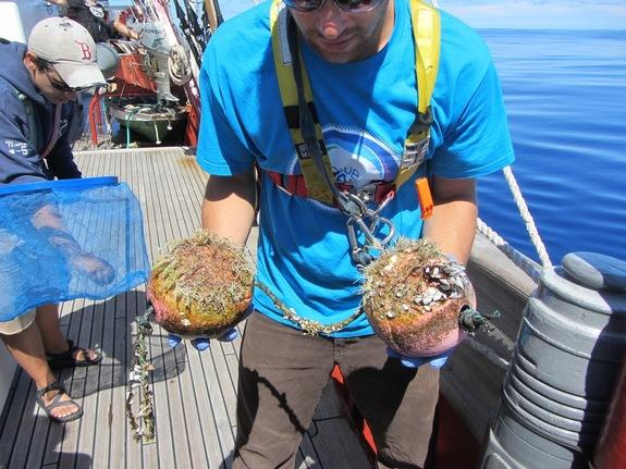 Secret World of Ocean Garbage Patch Microbes Revealed